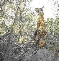 Firma en contra de las subvenciónes a LOS GALGUEROS en Andalucia. NO AL MALTRATO ANIMAL !!!