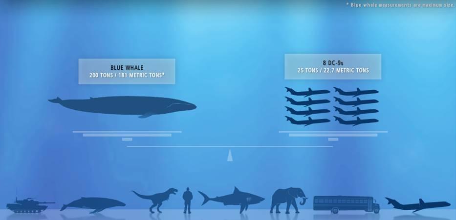 должностного схема синий кит игра стоит