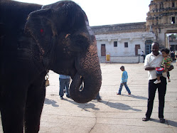 The elephant at the temple