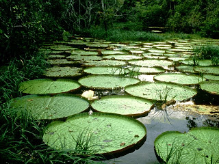 Image result for National Botanical Garden of Bangladesh