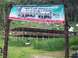 DAMC Plantation Sdn Bhd
