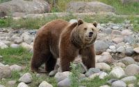 Bear ETF