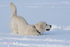 Das Schneehäschen!