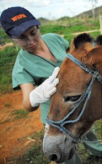 WSPA emergency team gives primary care to a horse