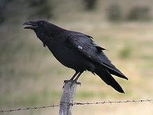 I'm Raven Mad