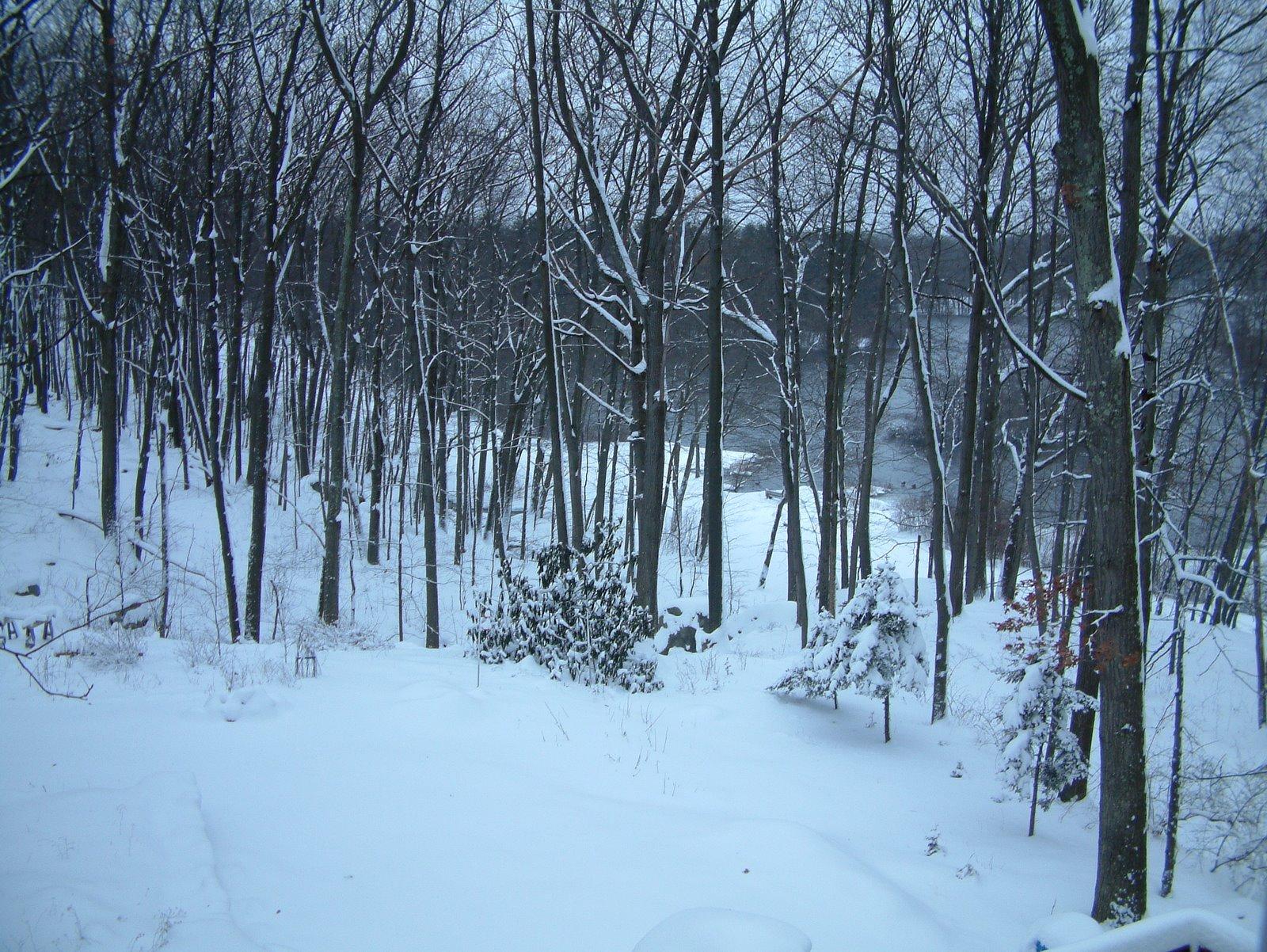 [Snow+12+20+08+005.JPG]