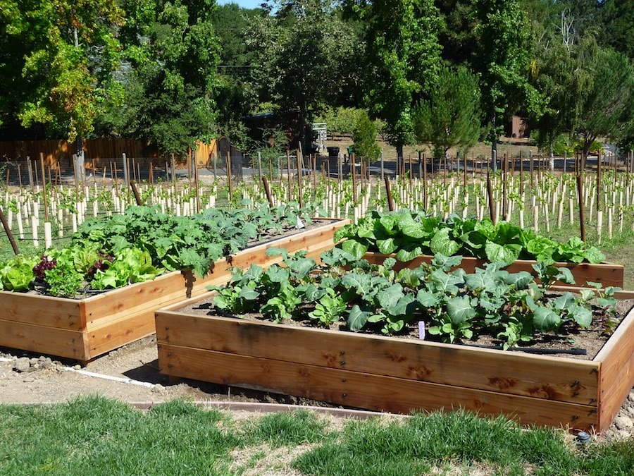 Foods for long life start your fall and winter vegetable for Raised veggie garden designs