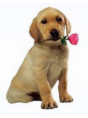 [cachorro_rosa.jpg]
