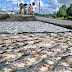 Harga Ikan Asin di Pantura Indramayu Meningkat