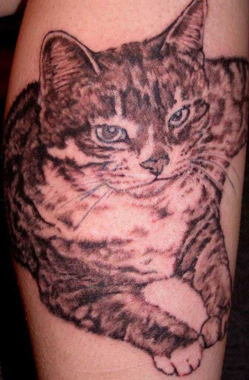 cat tattoo on belly. 2011 elly button cat tattoo
