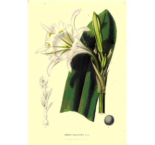 Fleurs De Marie Jacqueline White Flowers For Church Decoration