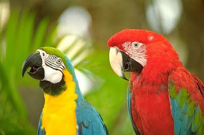 http://1.bp.blogspot.com/_Zn6n-SGxWPQ/SwLVp8y1euI/AAAAAAAAAXA/3u4Lr7zaUXk/s1600/papagaios.jpg