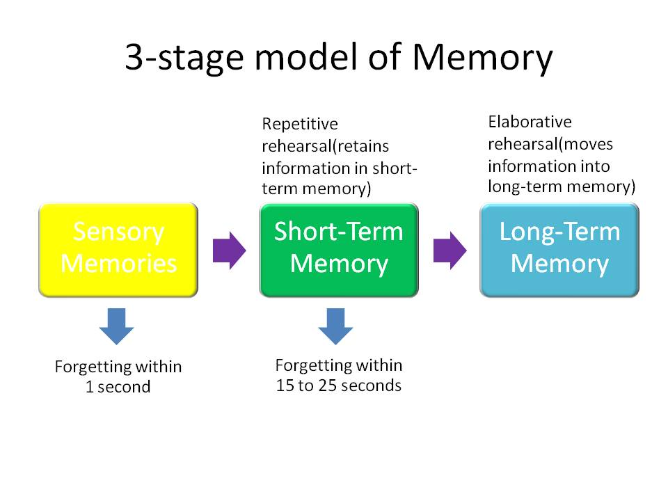 memory stages Cognition through the lifespan  – remote or long-term memory • judgment  – developmental stages play a significant role.