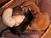 five puppies