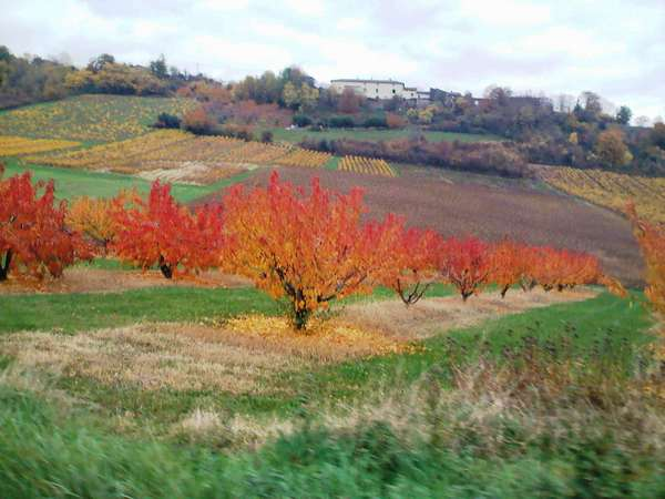 arbres automne