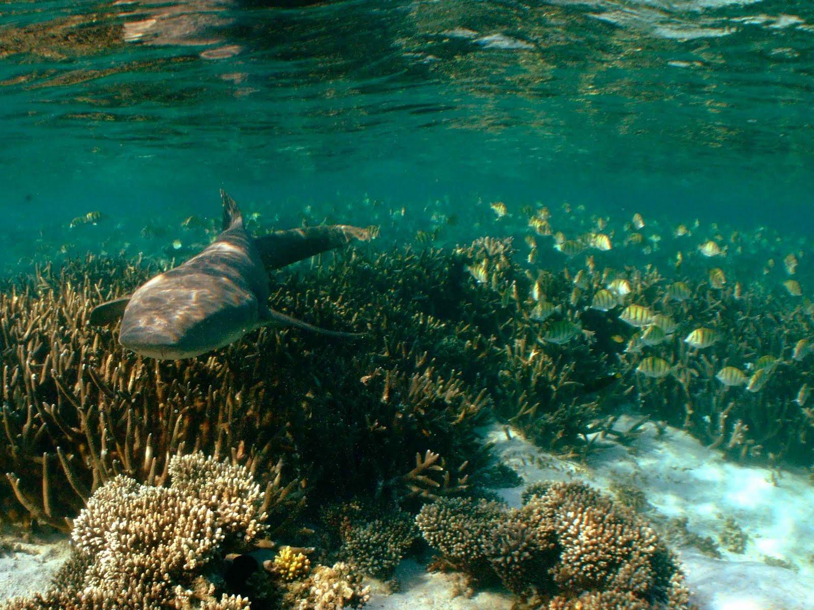 Sail ningaloo ningaloo reef dive liveaboard - Ningaloo reef dive ...