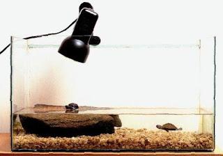 ساخت خشکی برای لاک پشت