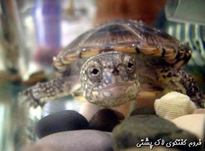 برندگان مسابقات زیباترین تصاویر لاک پشتی (دی ماه)