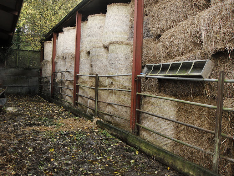 BETWEEN THE BYRE AND THE BARN