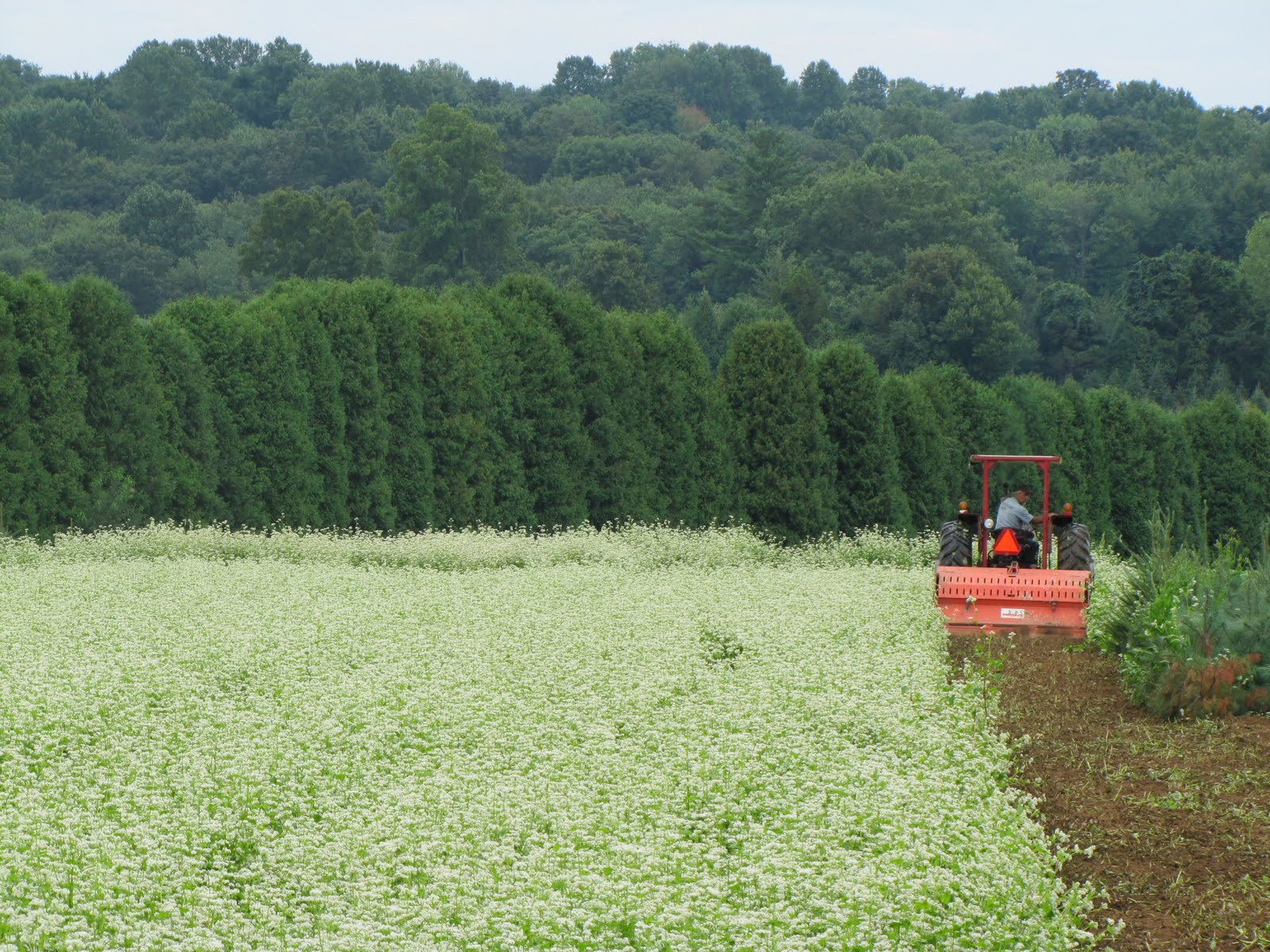A Field Of White Flowers Jones Family Farmers Blog