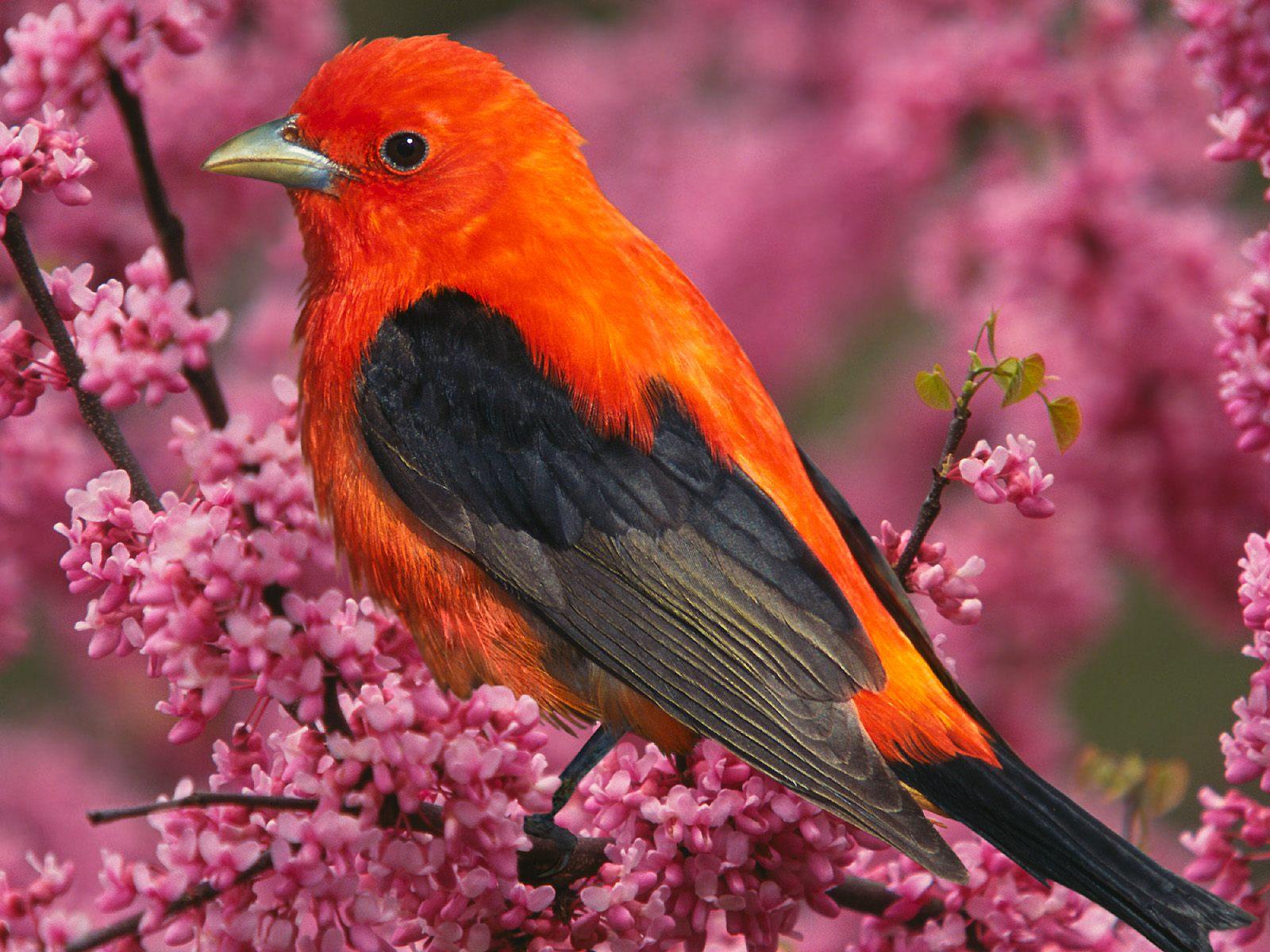 Imagini Natura Primavara   Flori Si Pasari