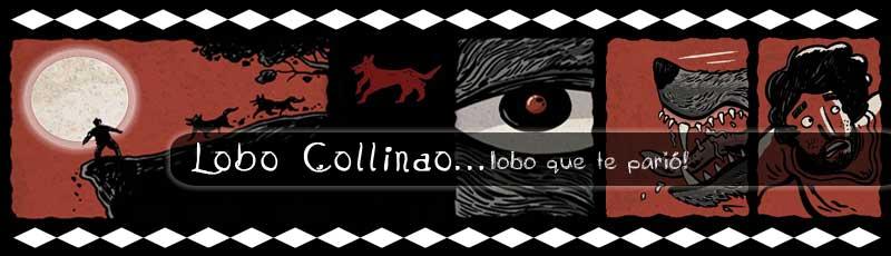 Lobo collinao