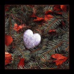 قلب تائه فى دنيا مليئه بالتائهين