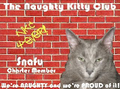 Snafu is a Charter Member of the Naughty Kitty Club
