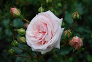 Mine bilder fra hagen