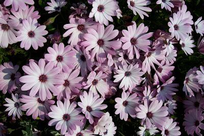 plantas para decorar, la dimorfoteca