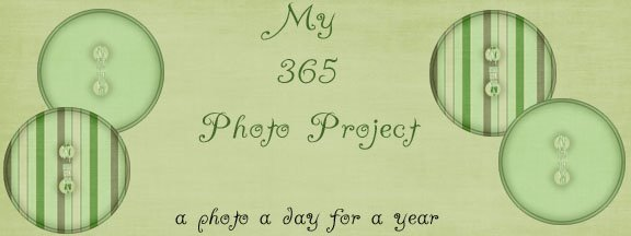 My 365 Photo Project