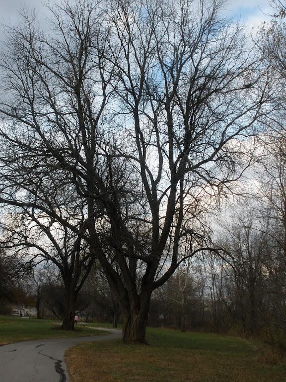 A Grand Tree