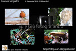 """Su e Giù fotografando"""