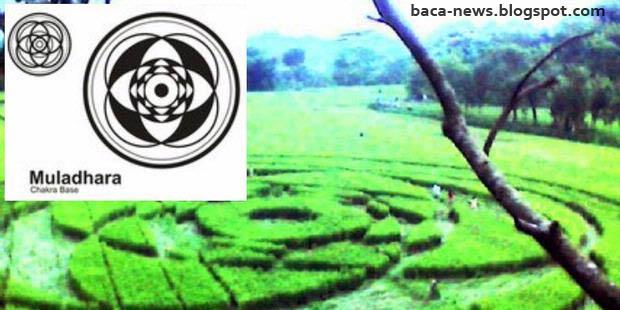 Jejak UFO (Crop Circle)  Sleman | Heboh ! Jejak UFO (Crop Circle) Di Sleman Yogyakarta