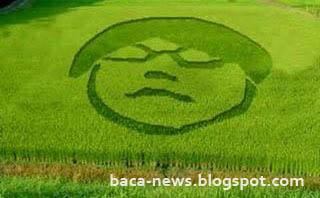 Crop Circle Gayus - Crop Circle Wajah Gayus - Crop Circle Mirip Gayus