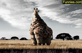 Fattest Giraffe photo