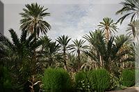 Palmeral de Nefta