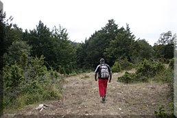 Seguimos los hitos hacia el bosque