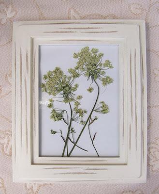 obrazek - kwiaty polne