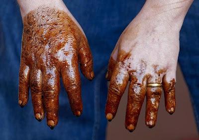 Păsările din Golful Mexic, victime ale petei de petrol