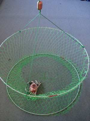 Echobaby catching blue swimmer crabs at port julia for How to make a fish trap for big fish