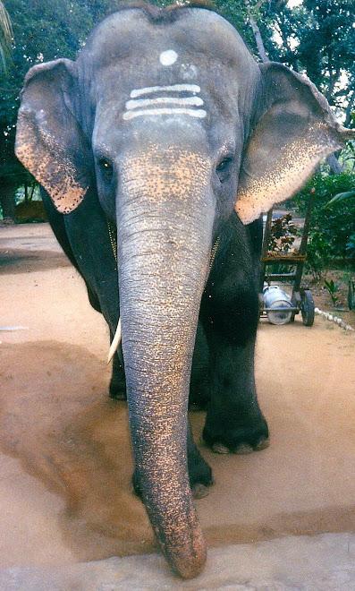 ELEPHANT SACRE A PUTTAPARTHI (Inde)