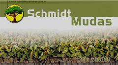 Schmidt Reflorestamento