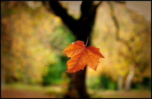 خواطر منقوله _حينما نغرق ذكريات