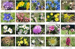 Cap.1 - I fiori dell'alto Appennino