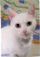 Mi gata Jessy, que ya nos dejo,no te olvido
