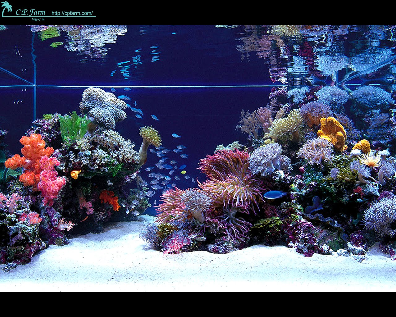Dwarf reef for Aquarium design
