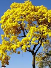 """""""A poesia é a arte de sustentação da alma"""" (Aurea de Luz)."""