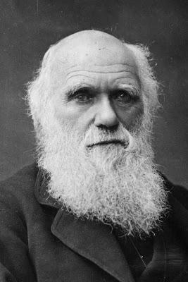 Image result for darvin
