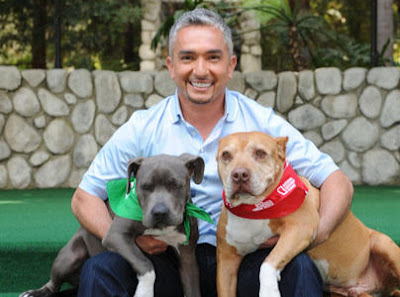 Cesar millan with daddy and daddy s protege junior daddy cesar millan